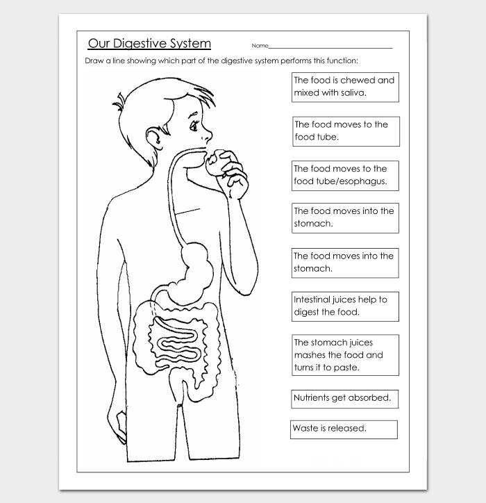 12+ Human Body Outline Templates (in Word & PDF) - Doc Formats