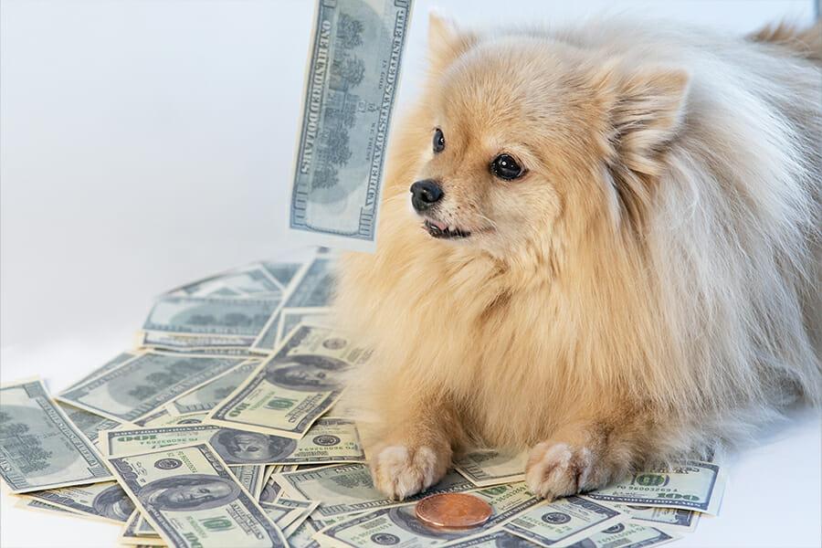 Free Dog / Puppy Bill